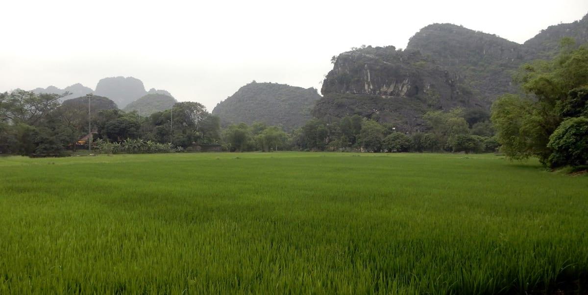 Hanoi, Vietnam: rice fields in Ninh Binh province
